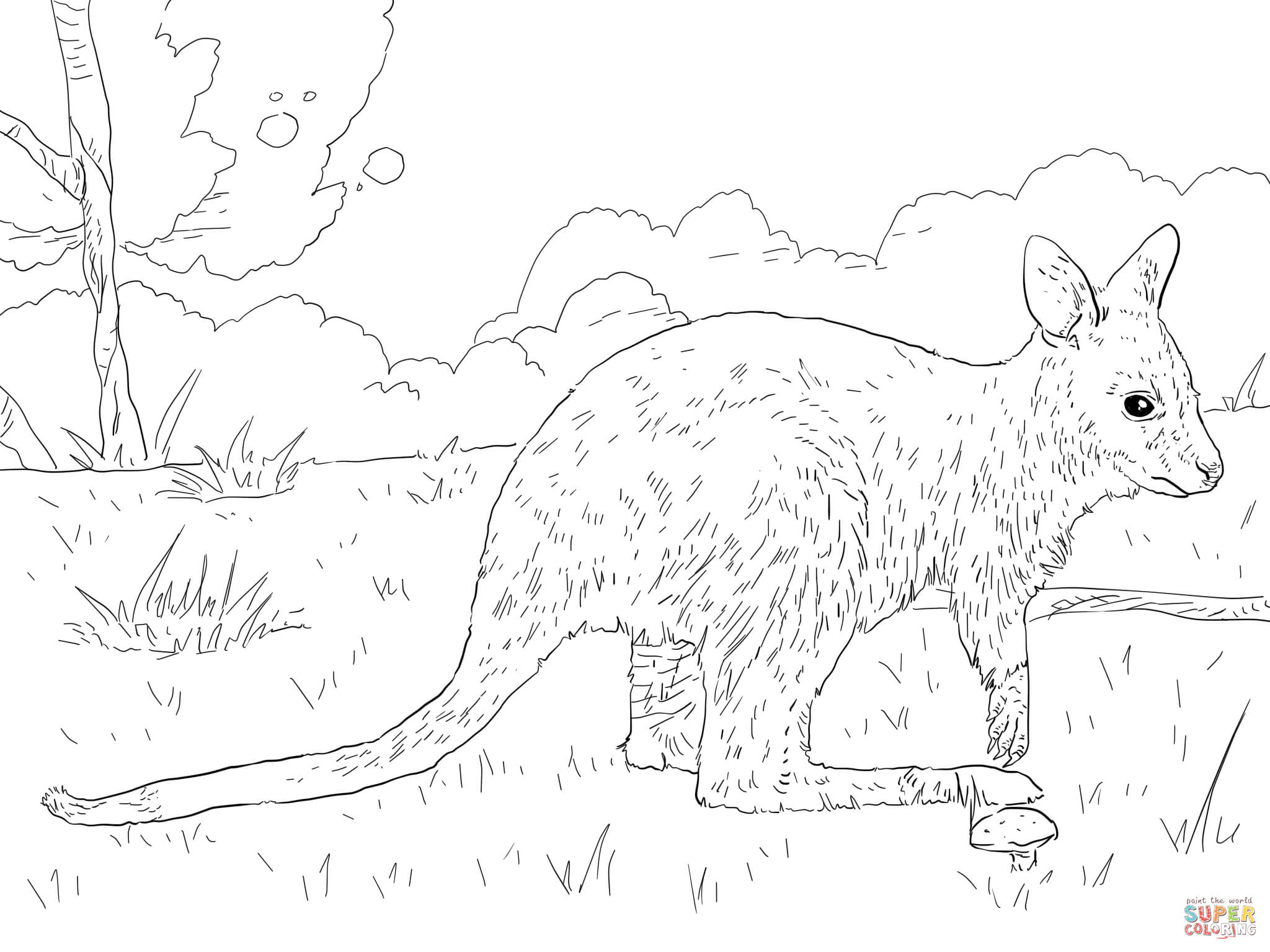 Juvenile Bennett S Wallaby Coloring Page