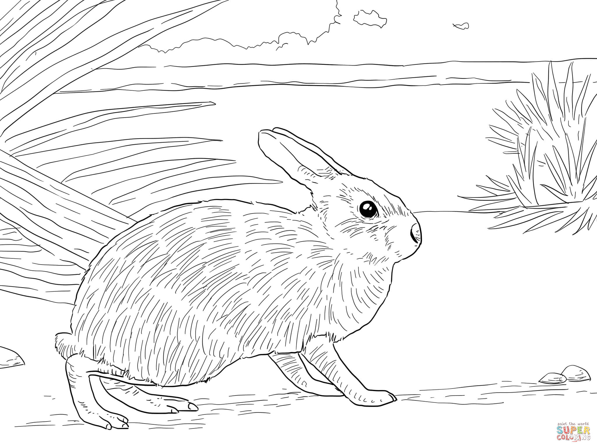 Marsh Rabbit Coloring Page