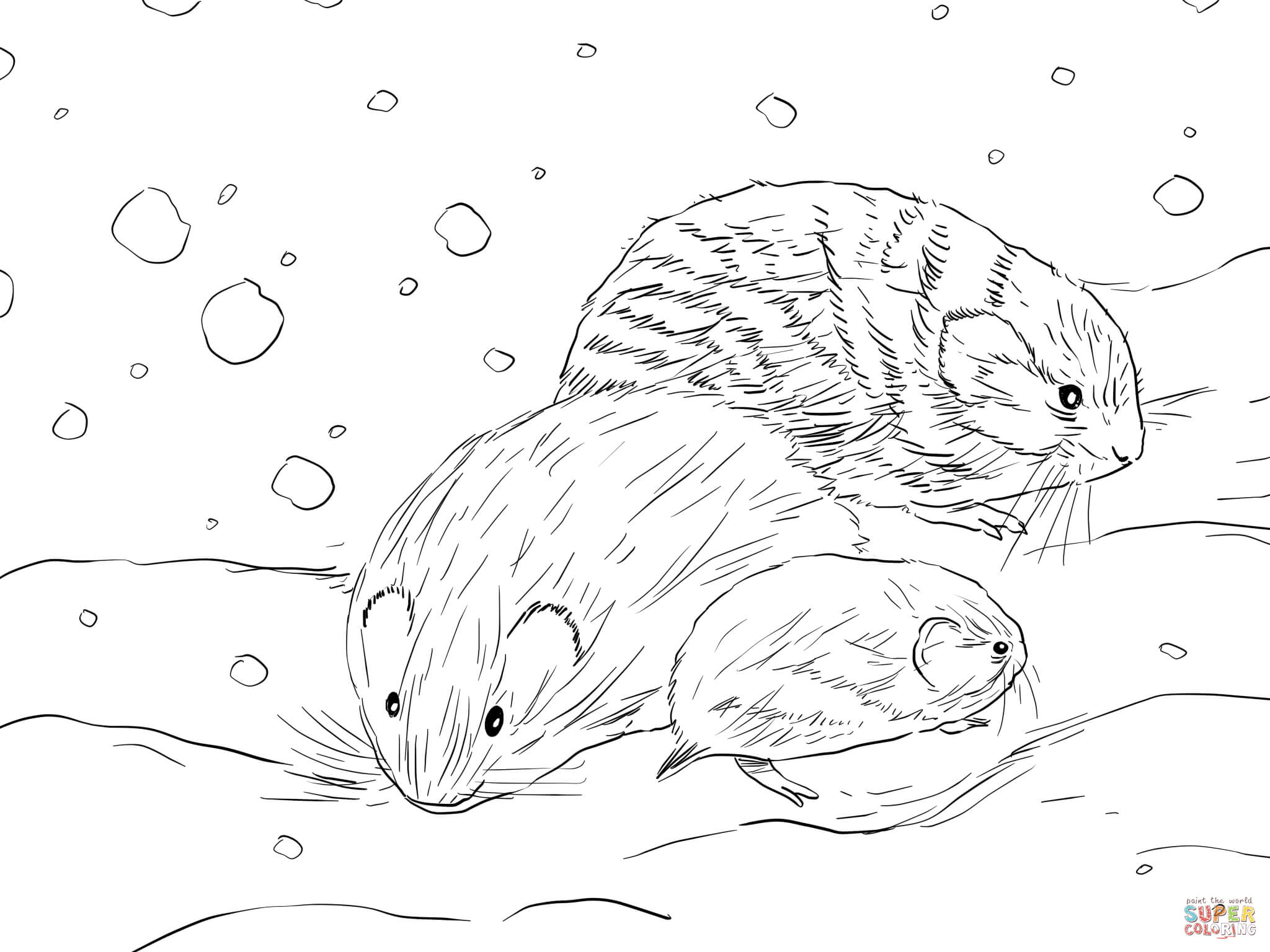 Northern Collared Lemming Coloring Page
