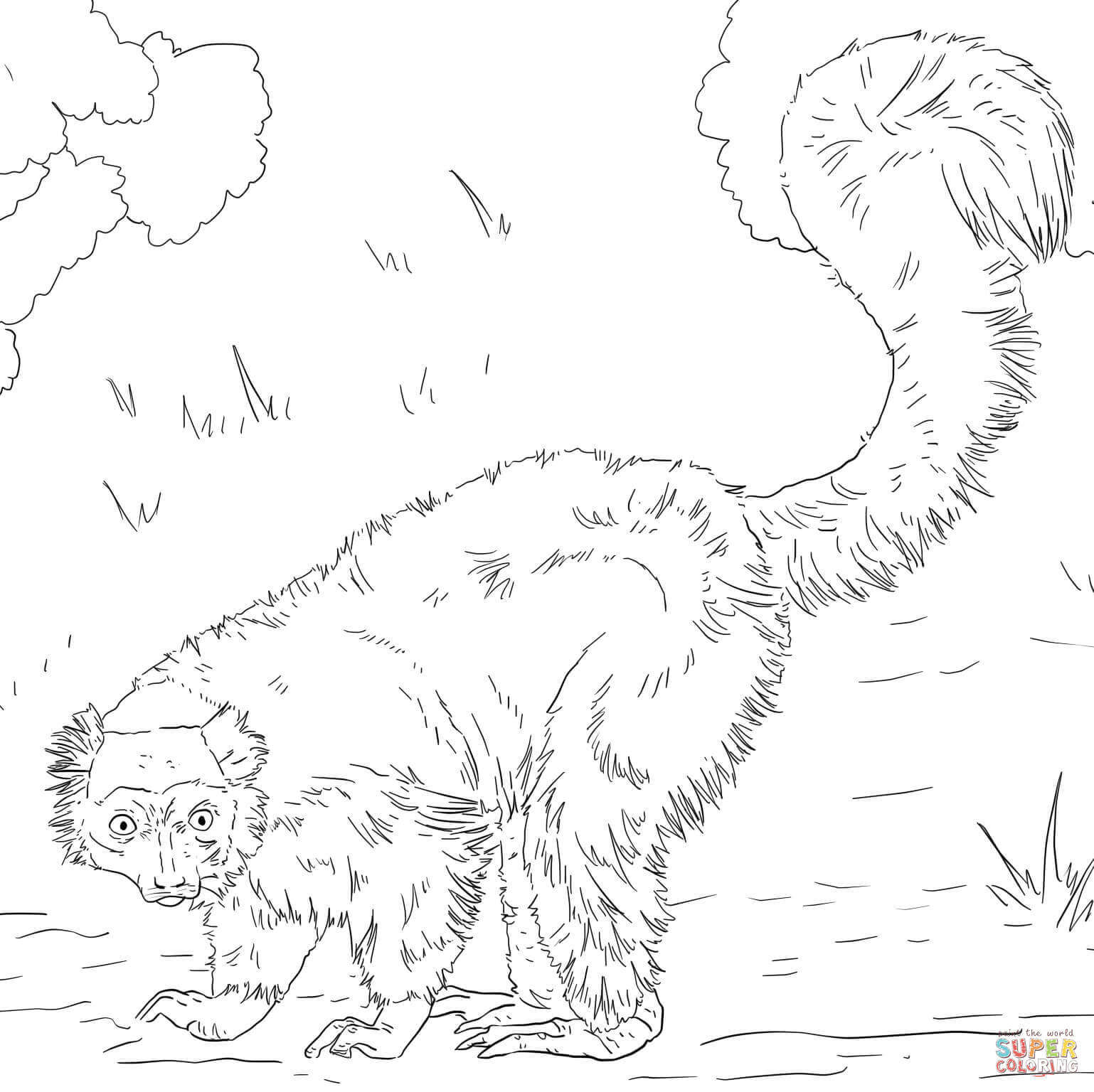 Red Ruffed Lemur Coloring Page