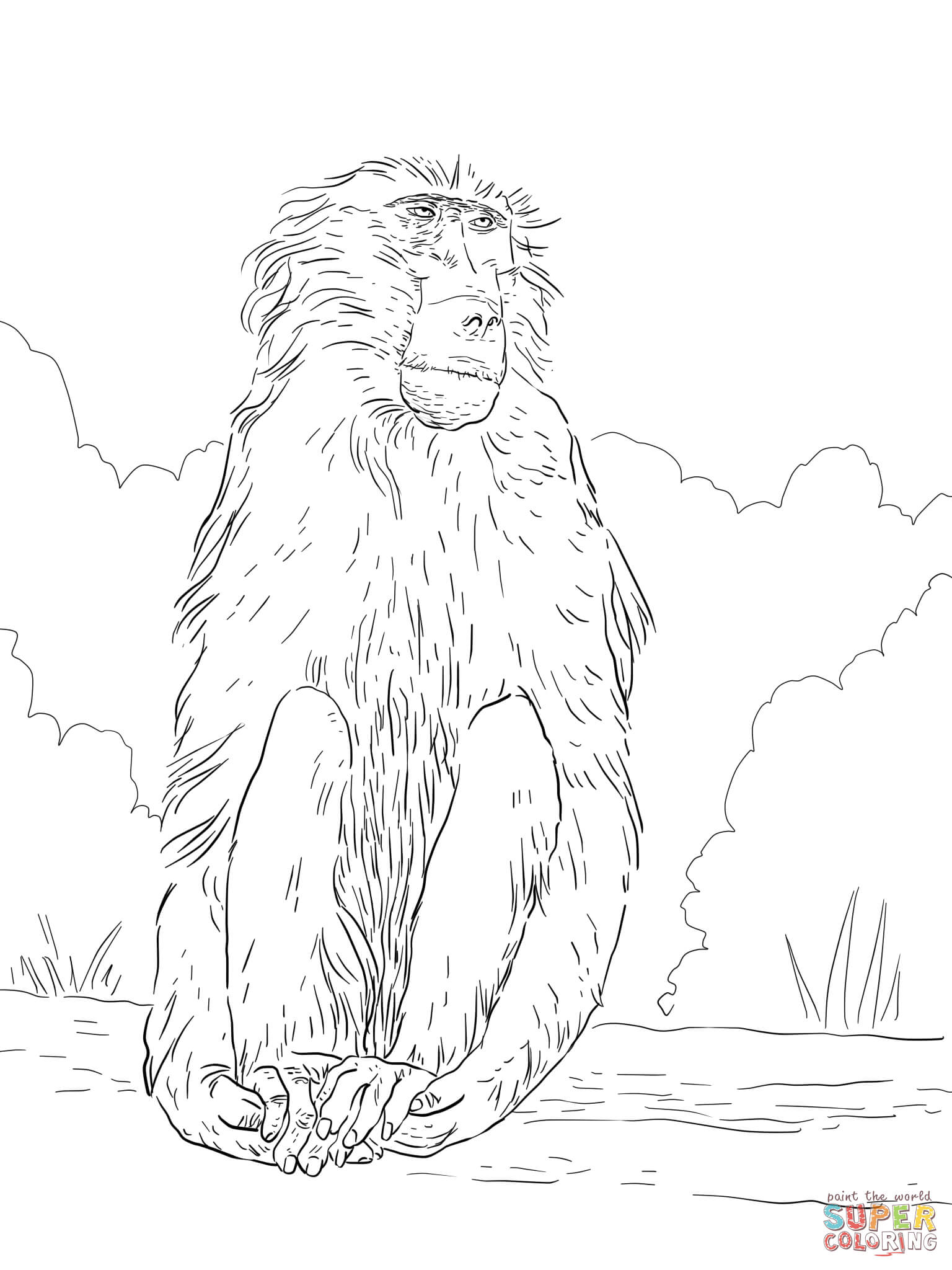 Chacma Baboon Coloring Page