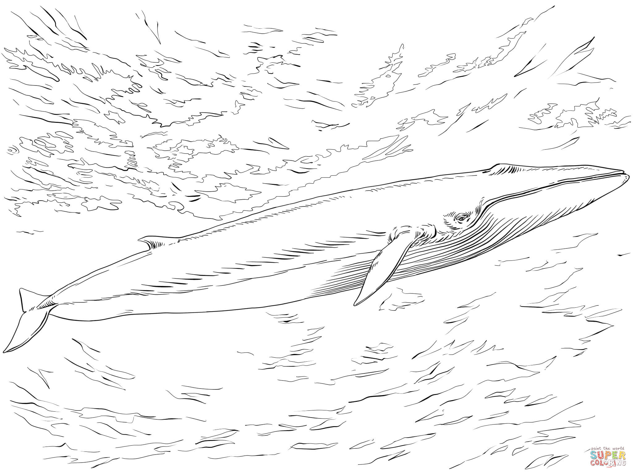 Fin Or Finback Whale Coloring Page Free Printable Coloring Pages