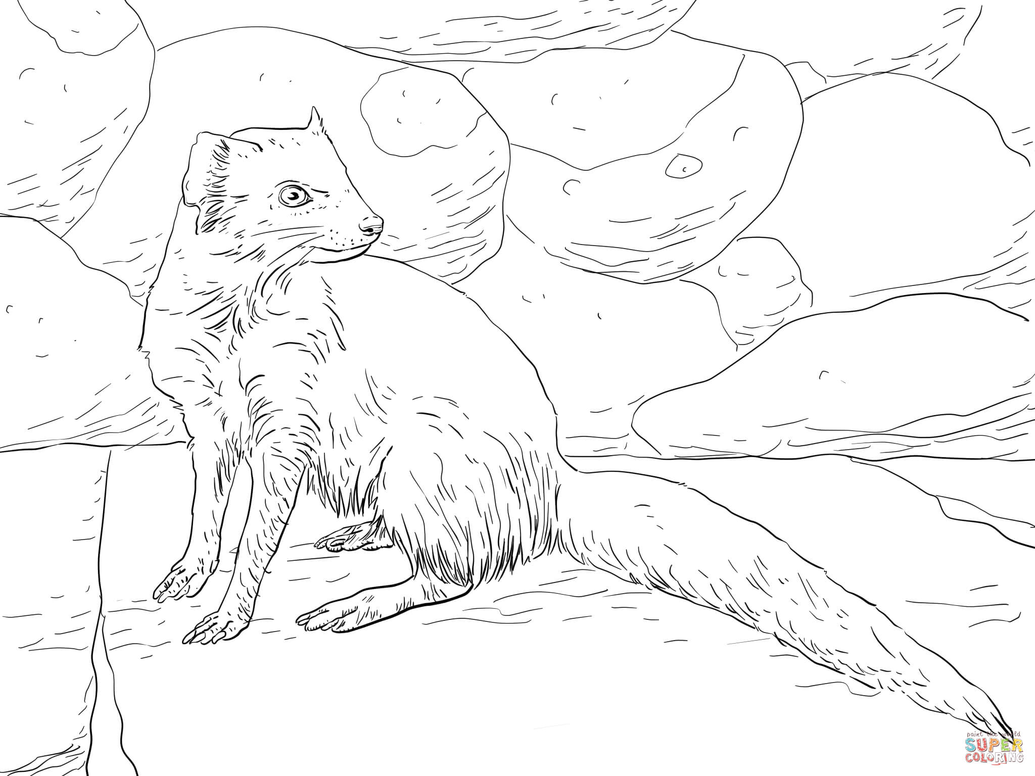 Yellow Mongoose Coloring Page