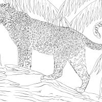 Jaguar Coloring Page Full Hd Rainforest Animals Of For Preschoolers Iphone Animals Printable