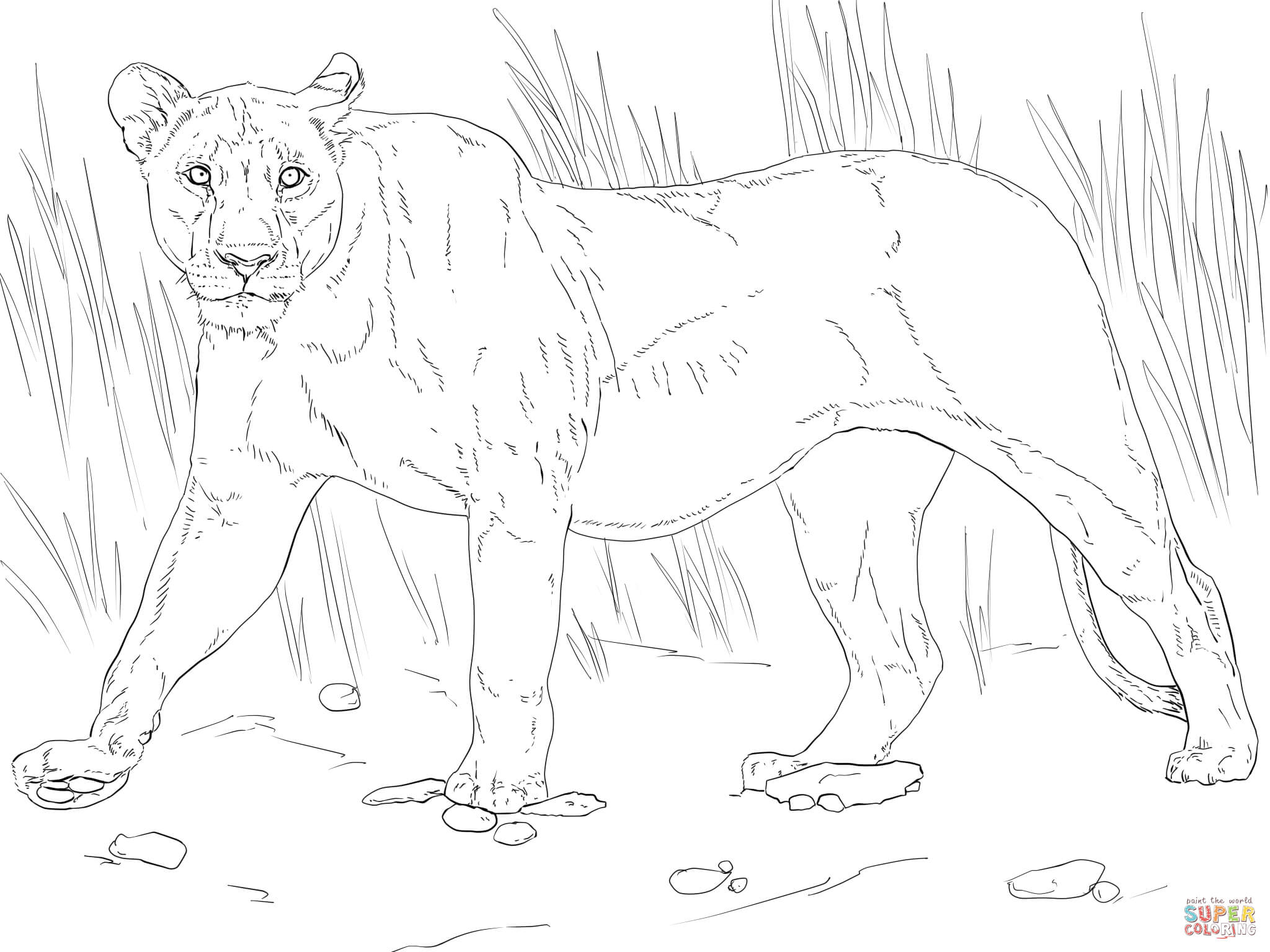 Walking Lioness Coloring Page