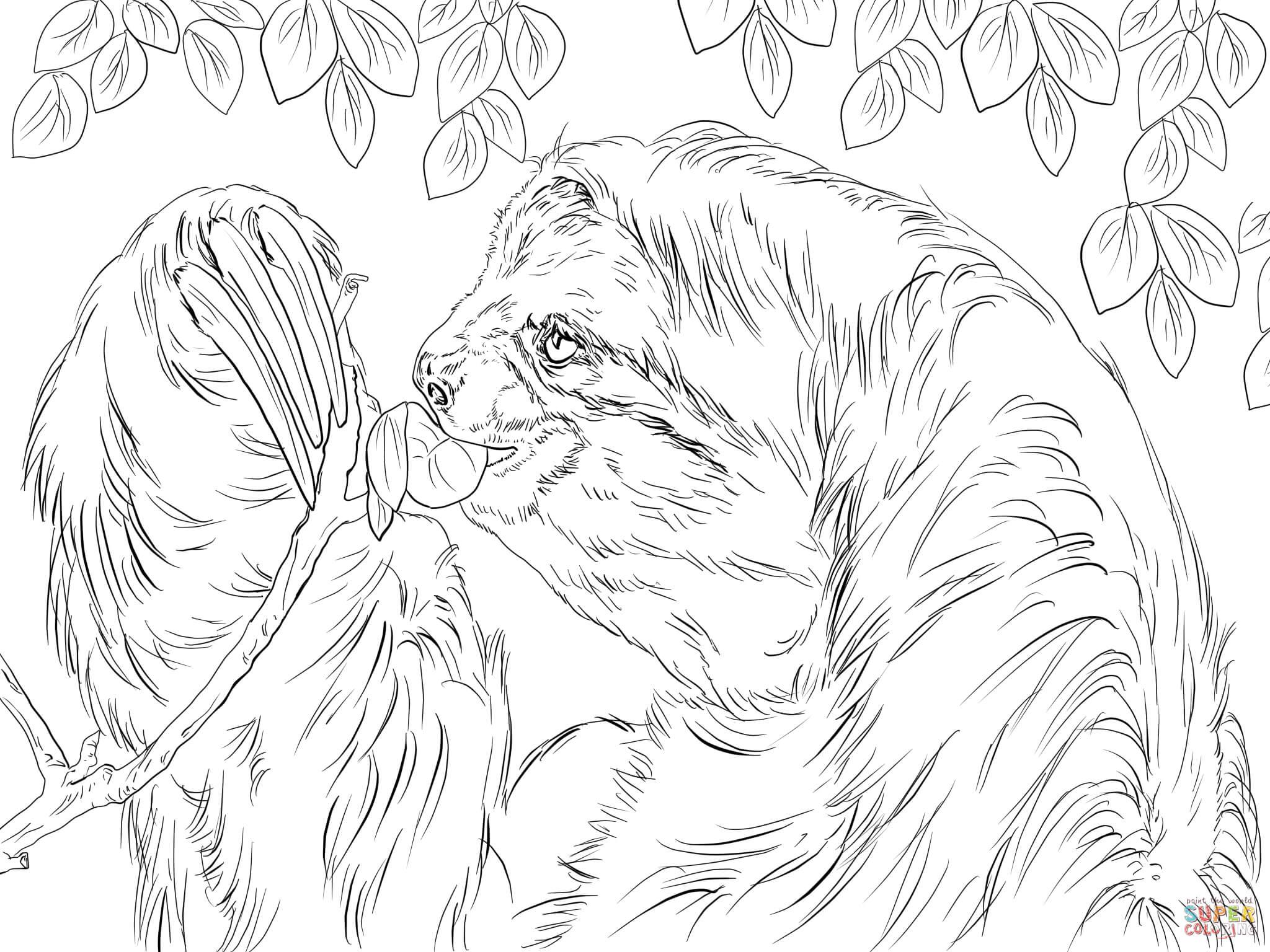 Ausmalbild Dreifinger-Faultier frisst Blätter