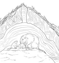 click the beaver lodge  [ 2048 x 1536 Pixel ]