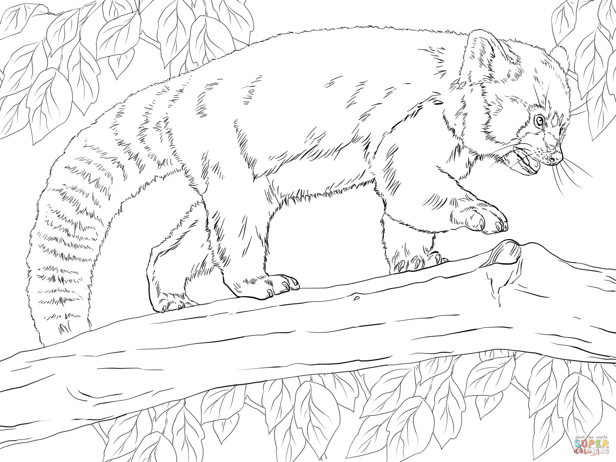 Realistic Red Panda Coloring Page Free Printable Coloring Pages