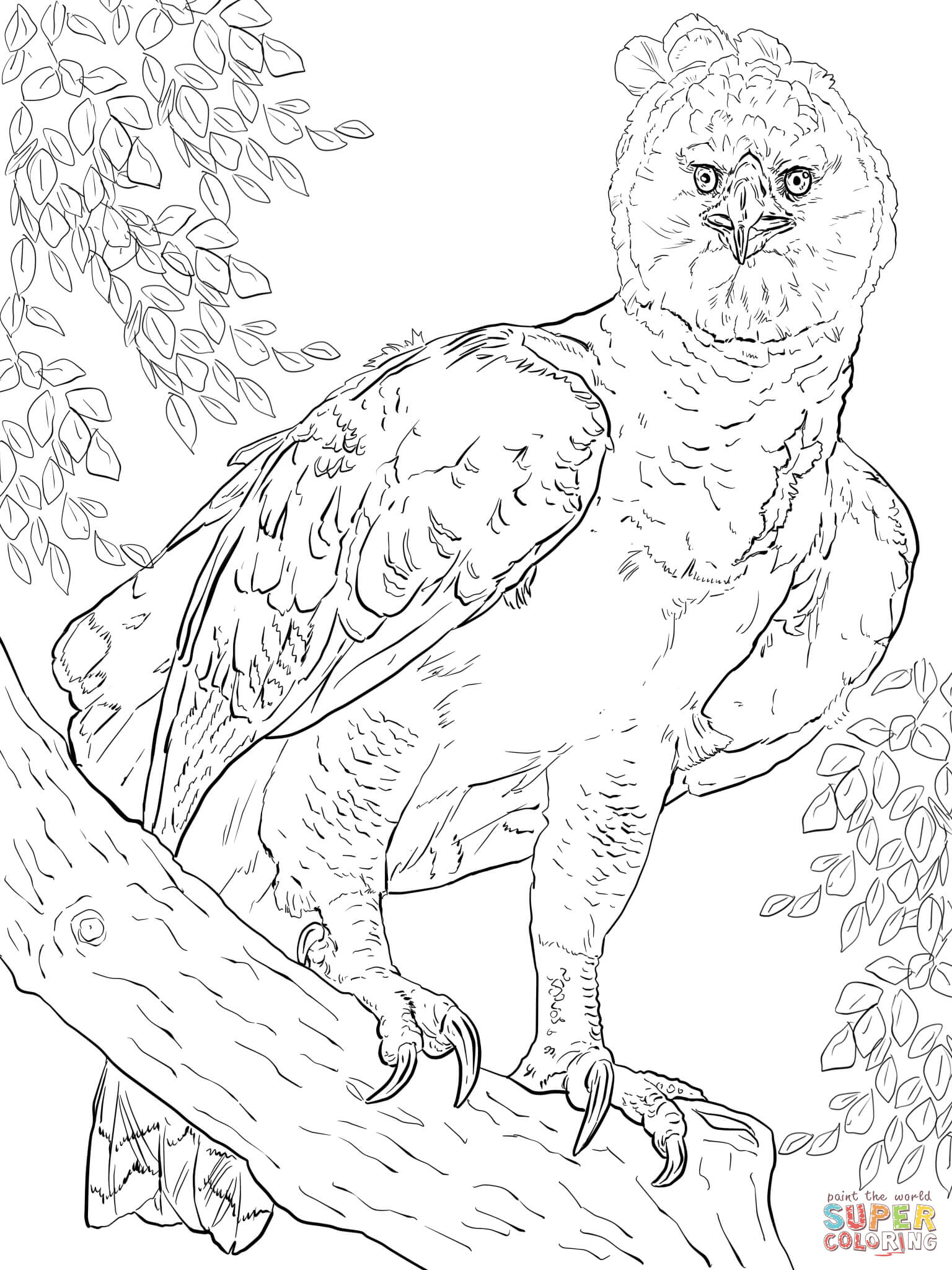 American Harpy Eagle Coloring Page