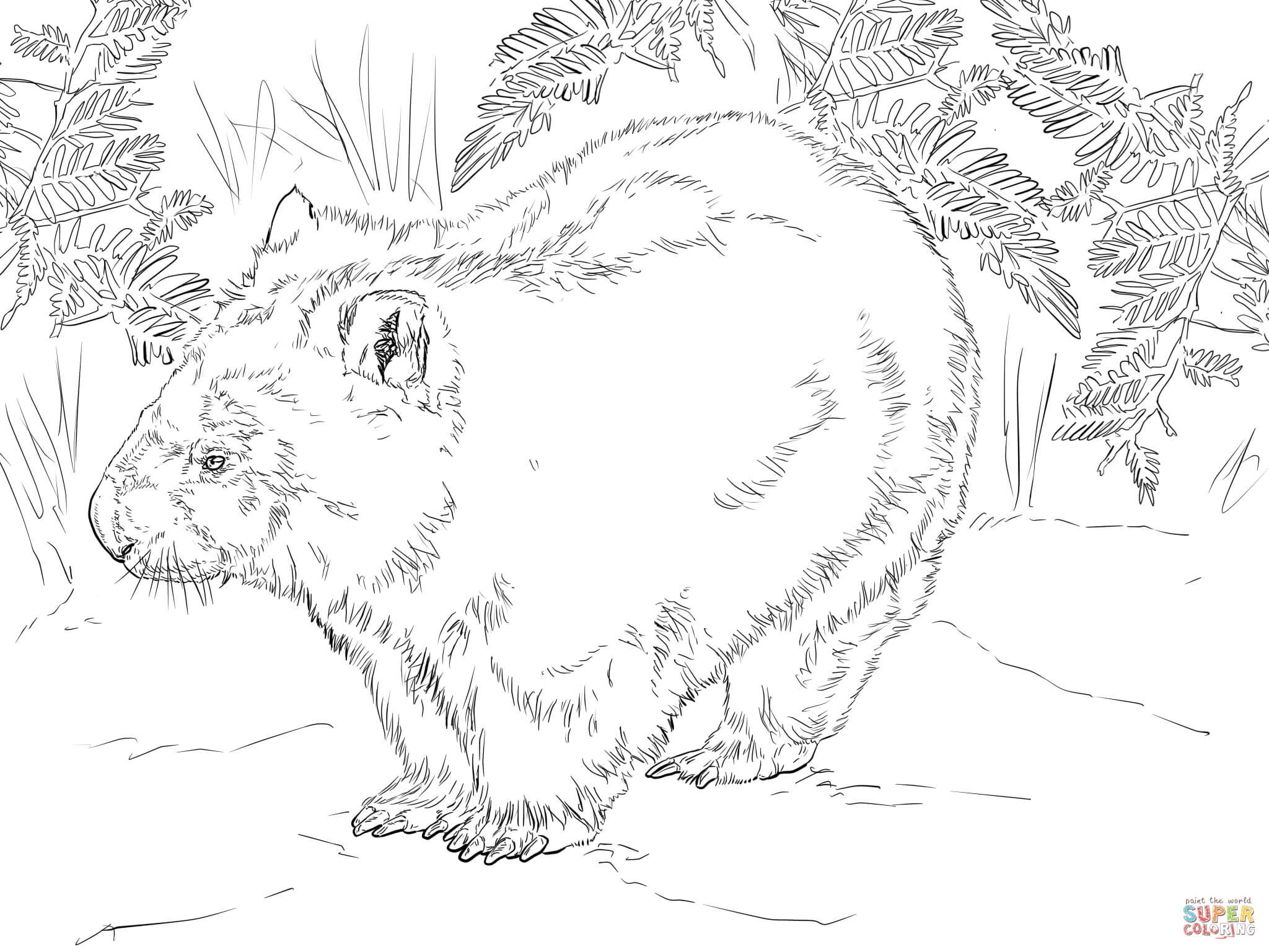 Pin Wombat-stew-colouring-pages-image-search-results on