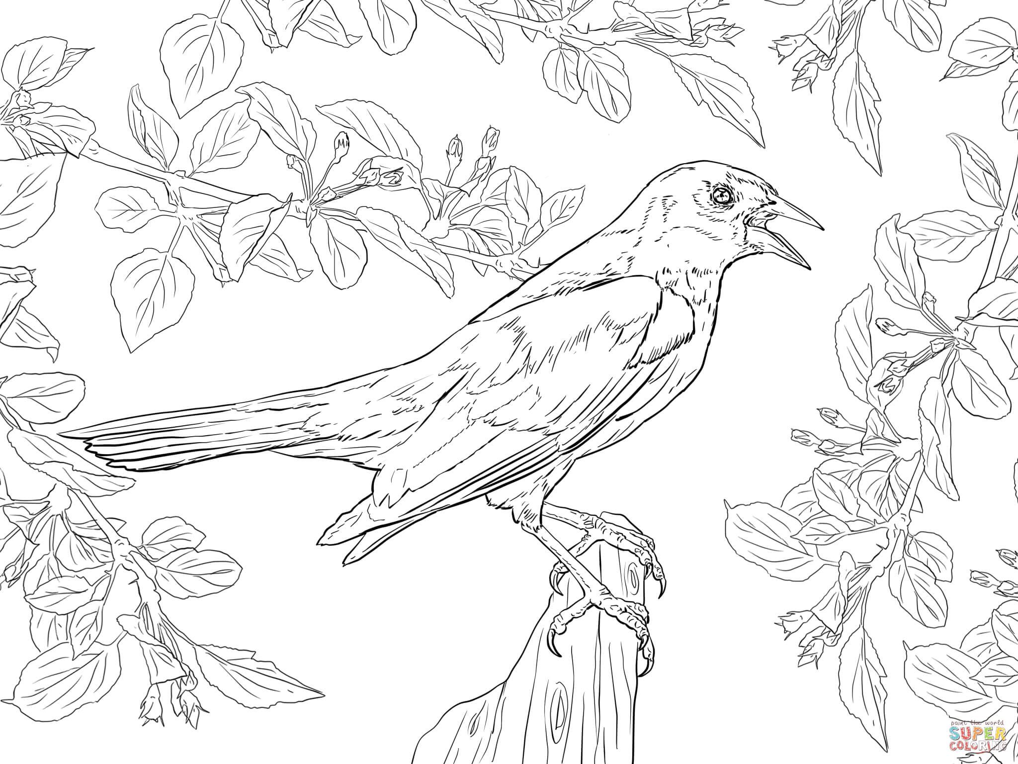 Yellow Shouldered Blackbird Coloring Page