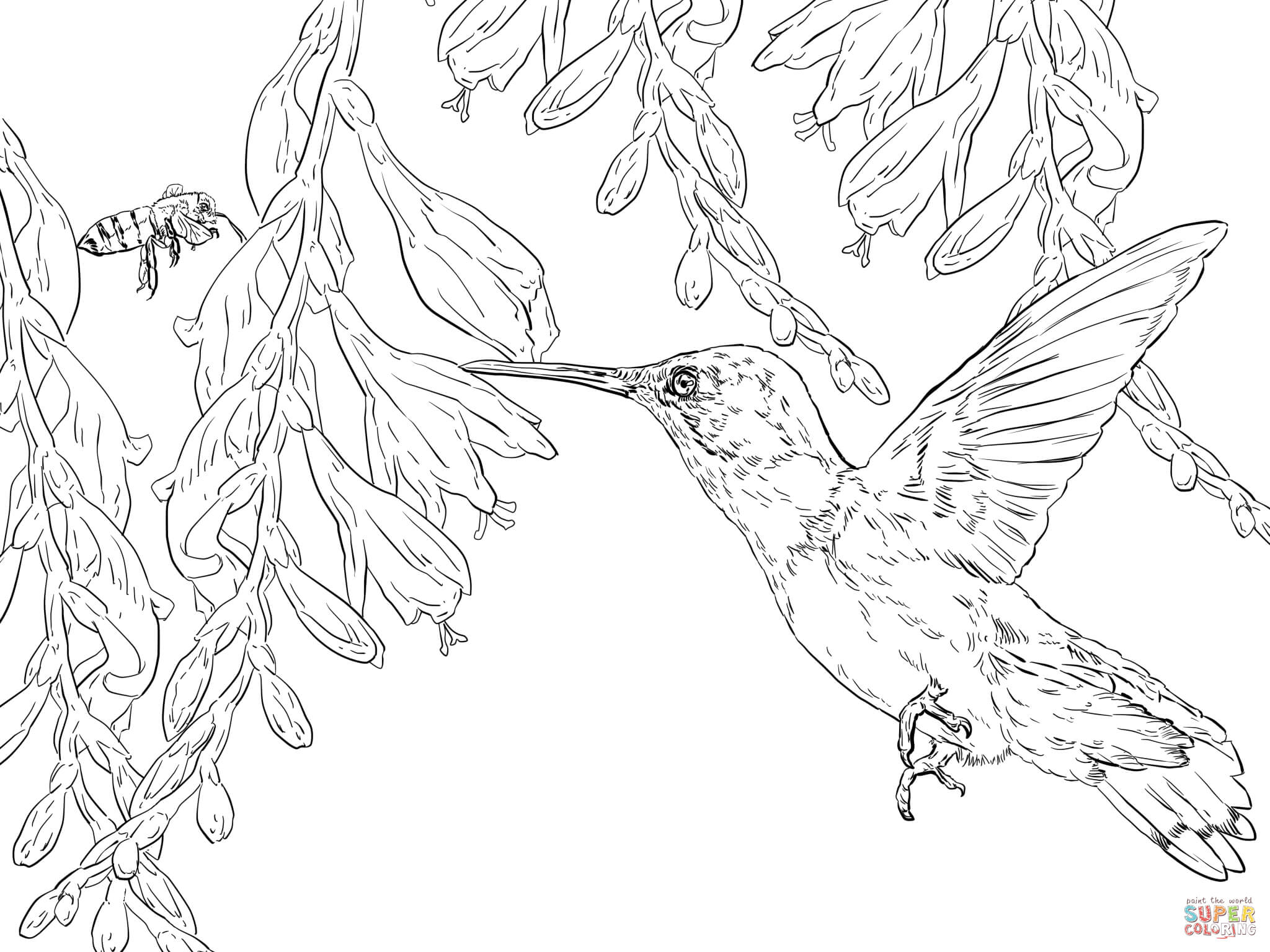 Bee Hummingbird Coloring Page