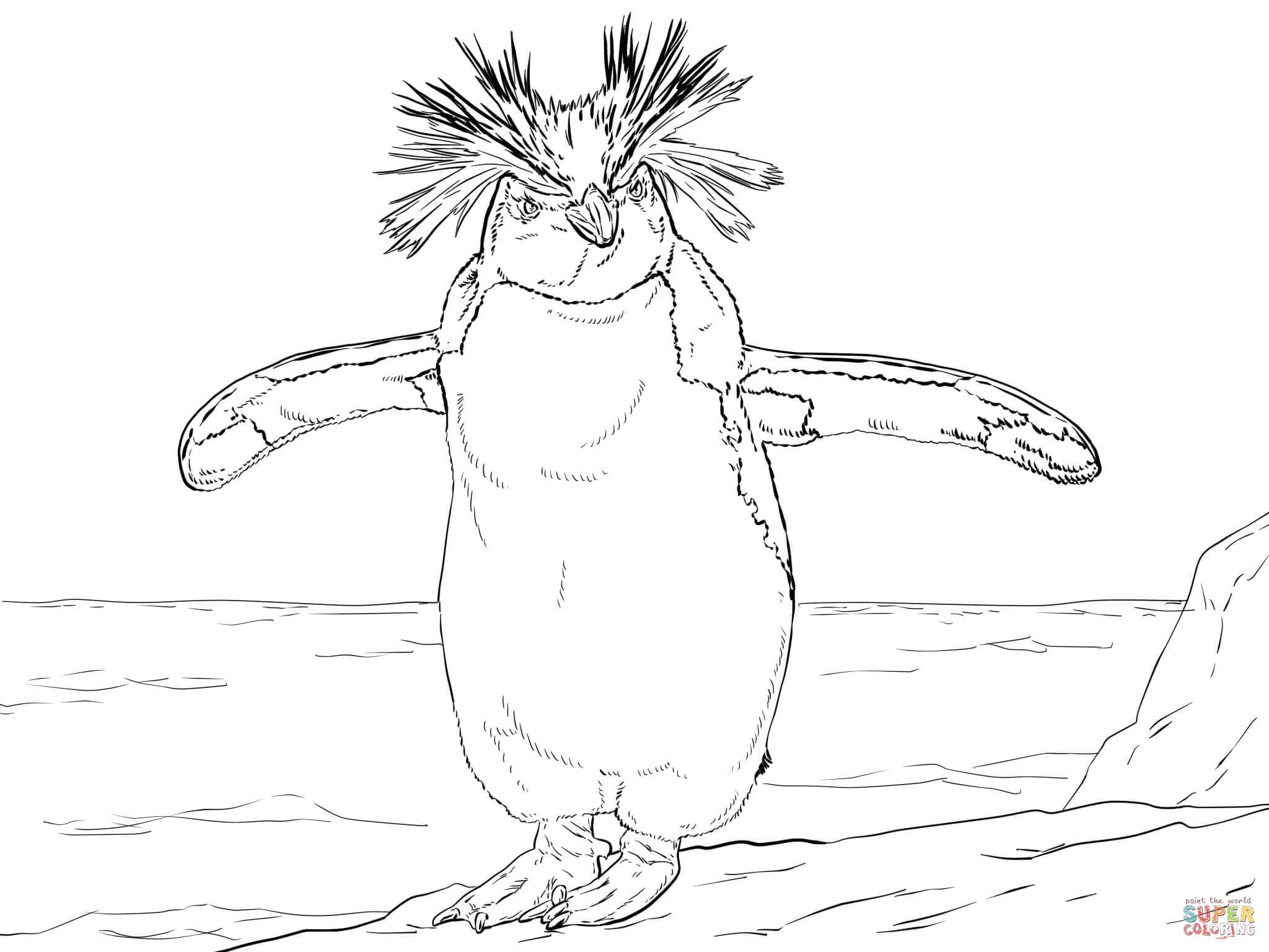 Northern Rockhopper Penguin Coloring Page