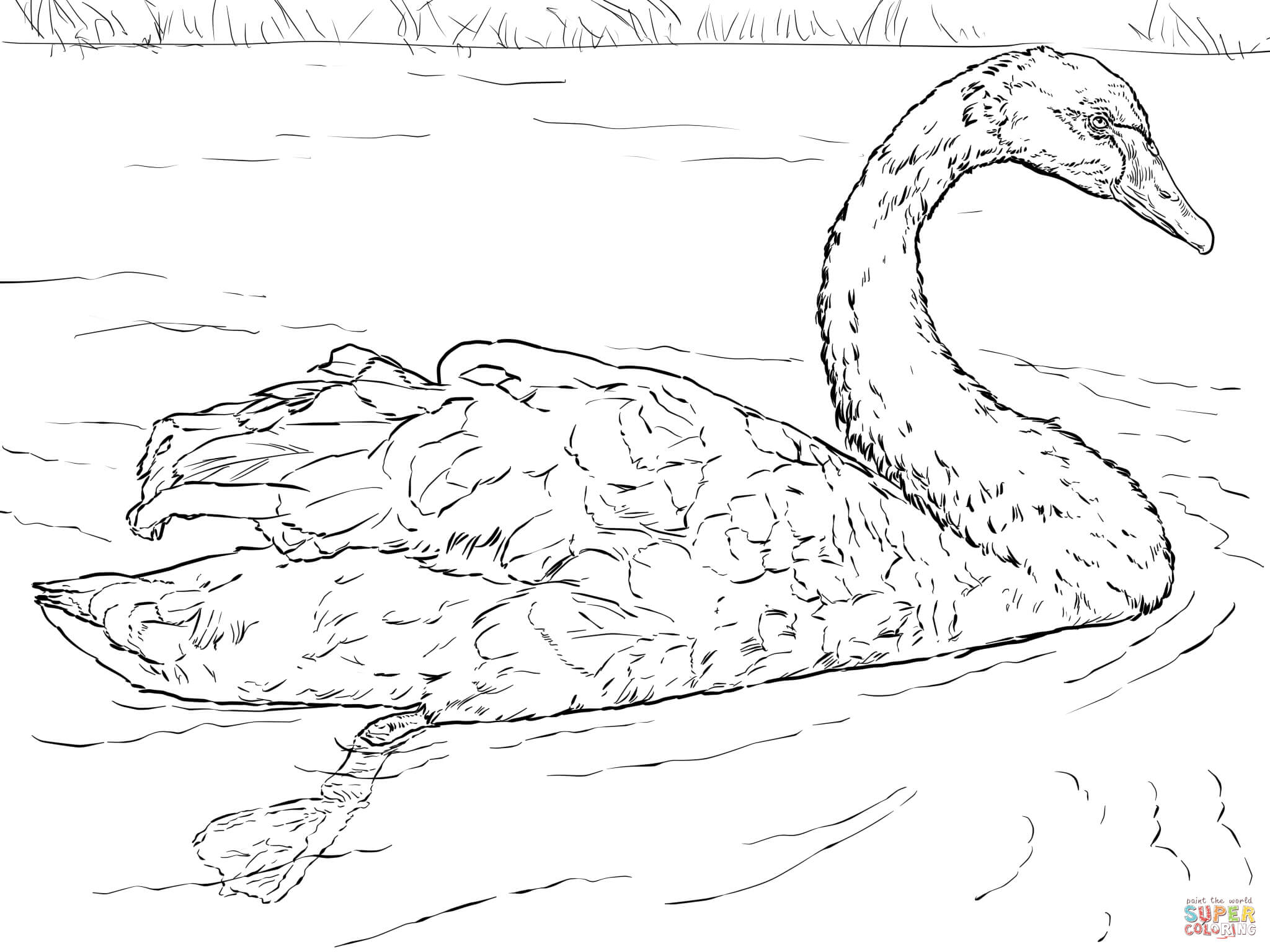 Swan Printable Coloring Pages