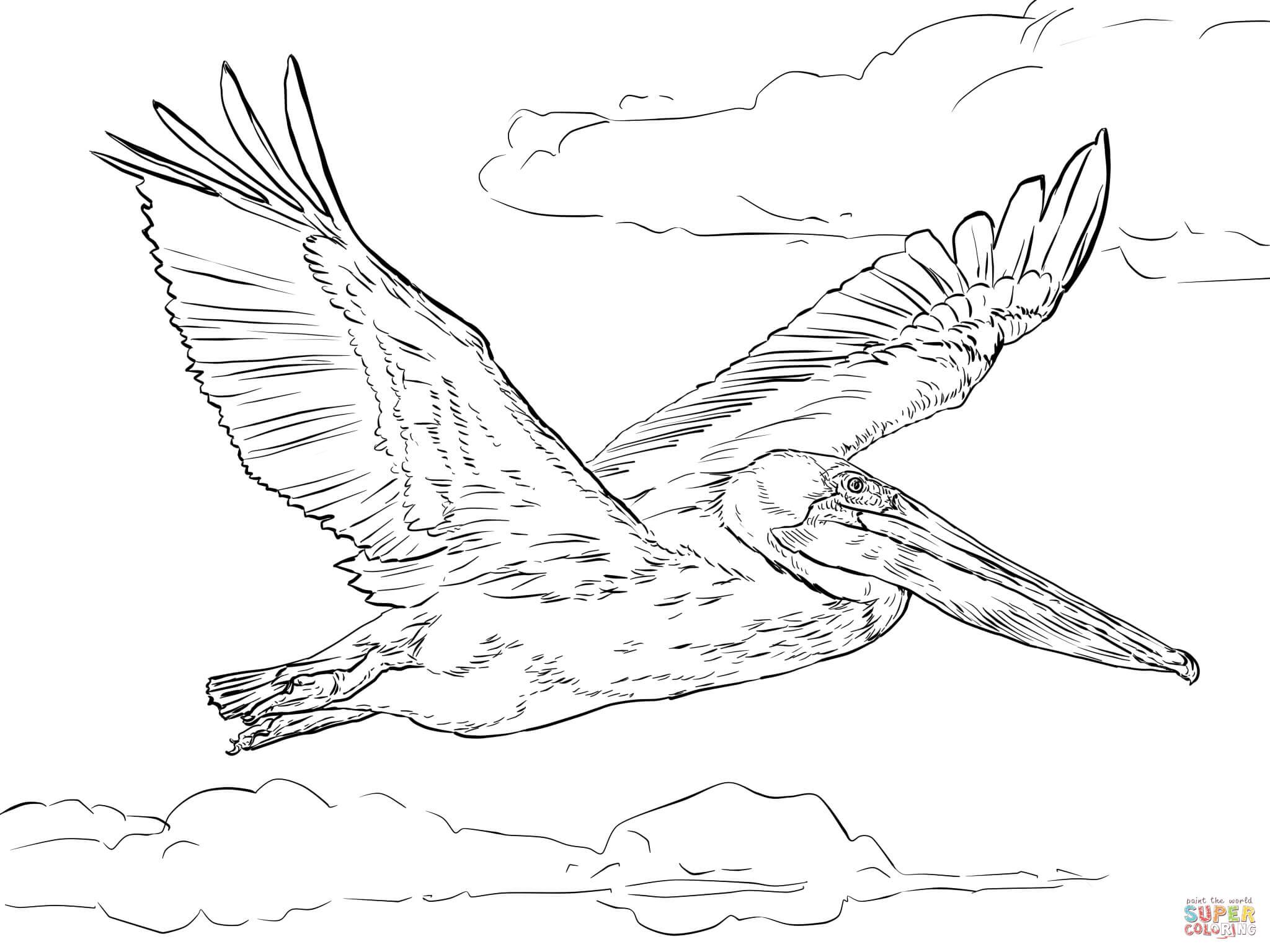 Brown Pelican In Flight Coloring Page