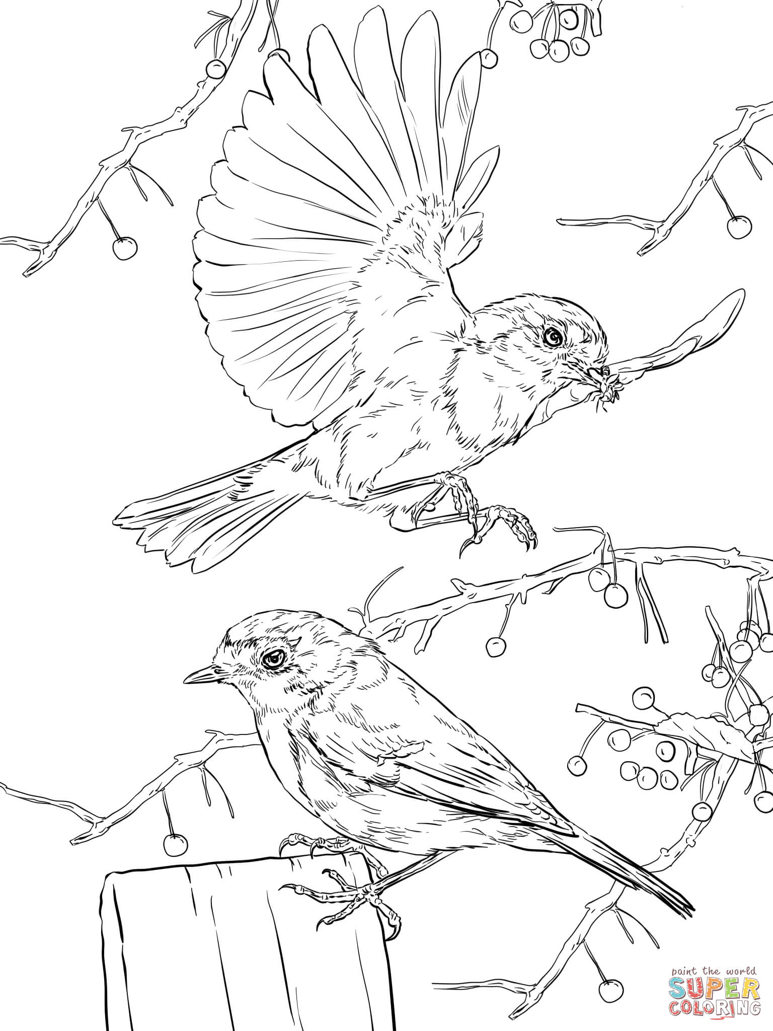 European Robins Coloring Page