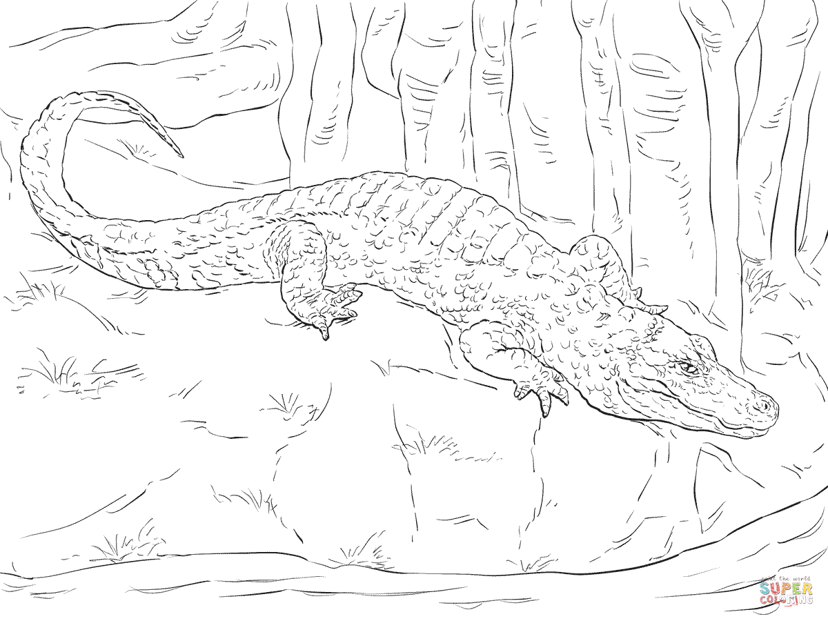 Chinese Alligator Coloring Page
