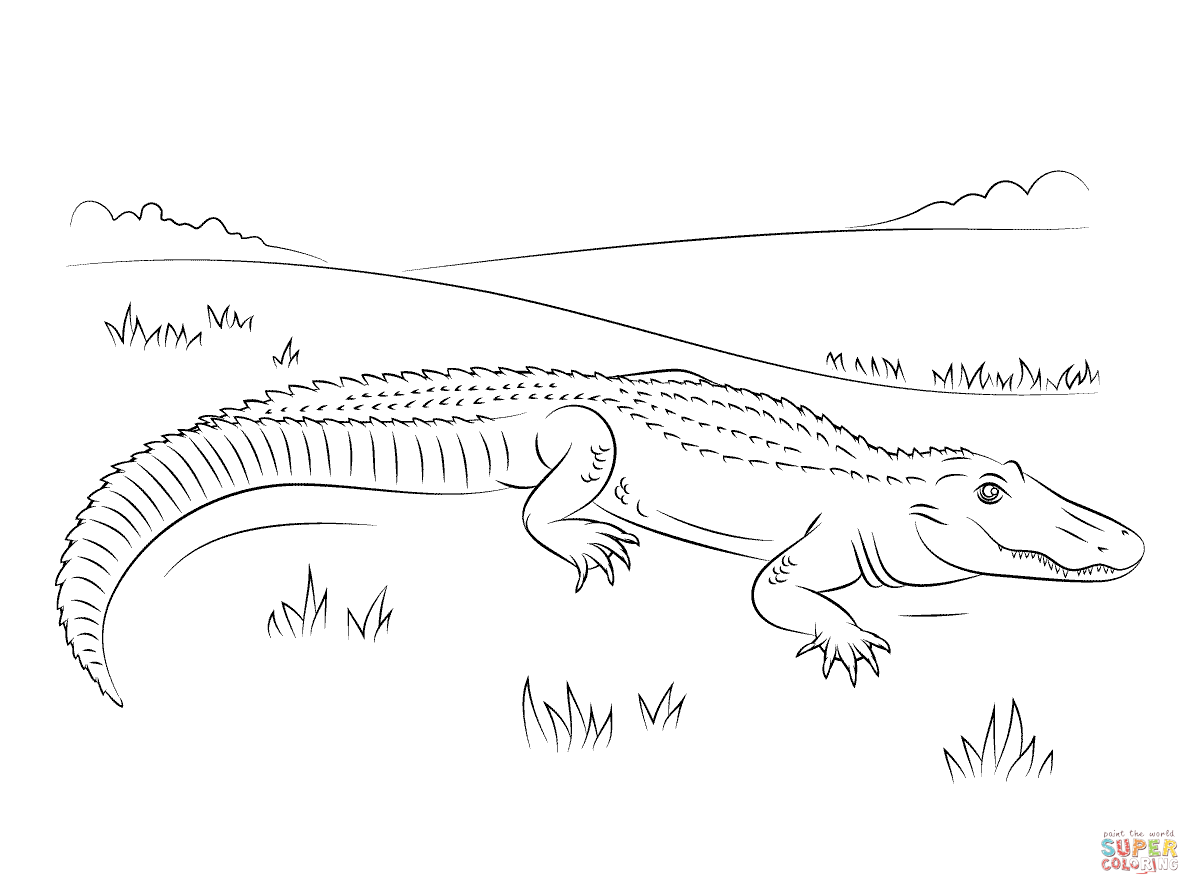 Cute American Alligator Coloring Page
