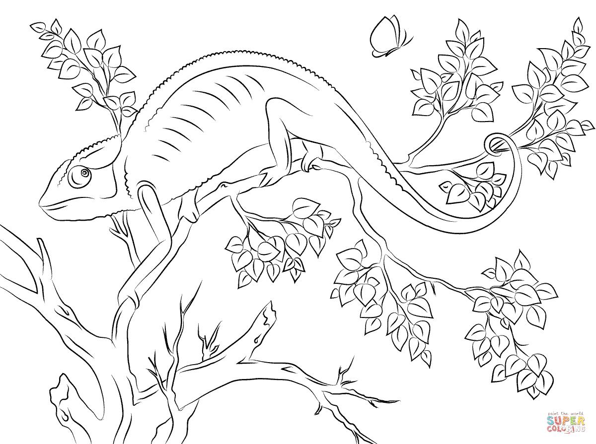 Kolorowanka Uroczy Kameleon