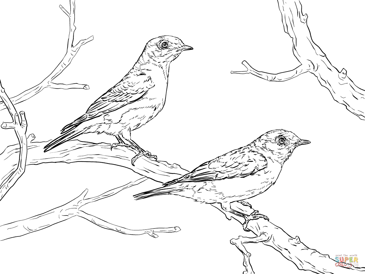 Eastern Bluebird Pair Coloring Page