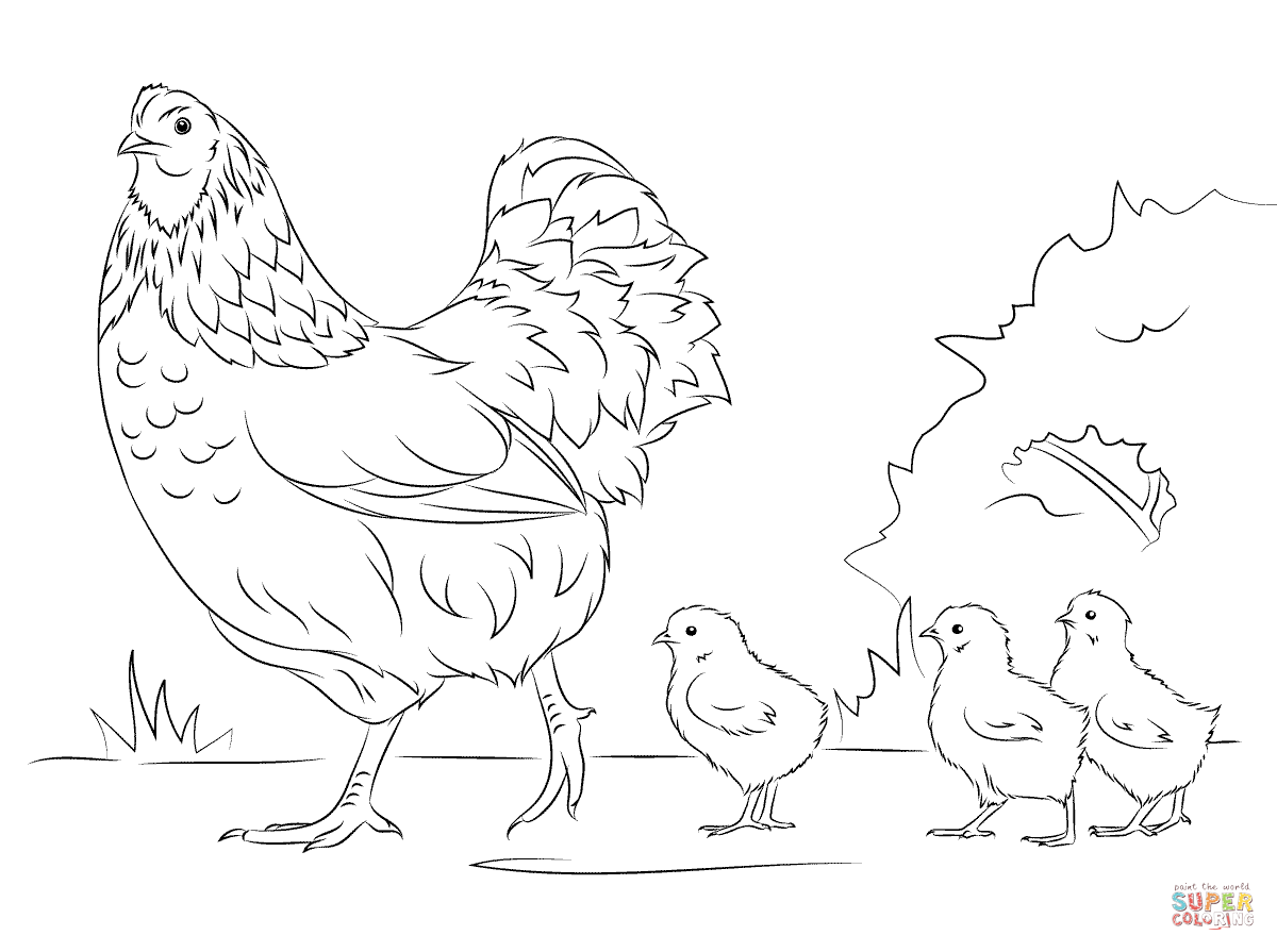 Hen And Cute Chicks Coloring Page