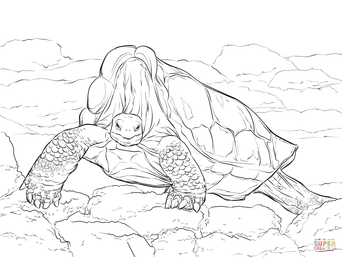 Lonesome George Pinta Island Giant Tortoise coloring page