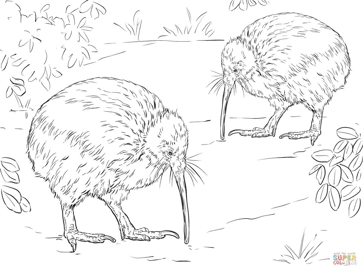 Juegos Kiwi. Great Resina Pjaro Kiwi Vs Canguro Tic Tac