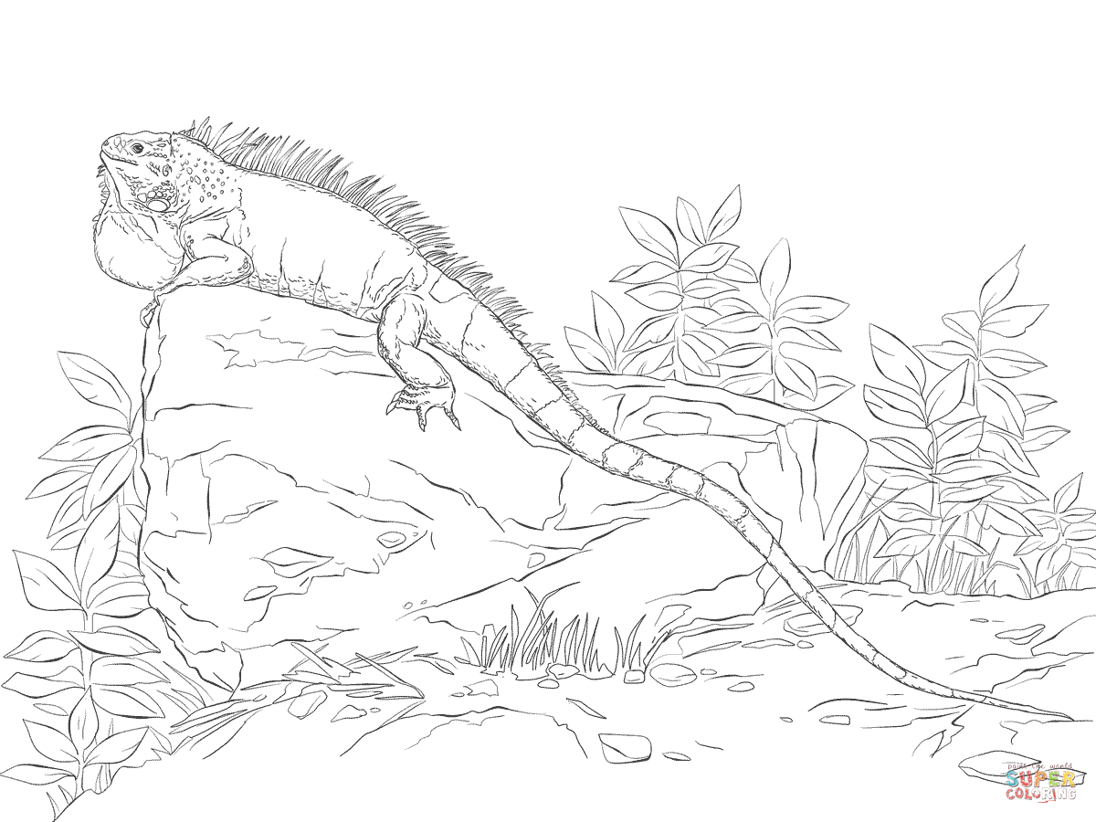 Realisitc Green Iguana Coloring Page