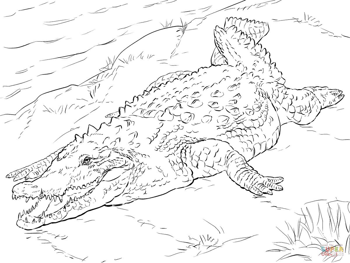 Realistic American Crocodile Coloring Page