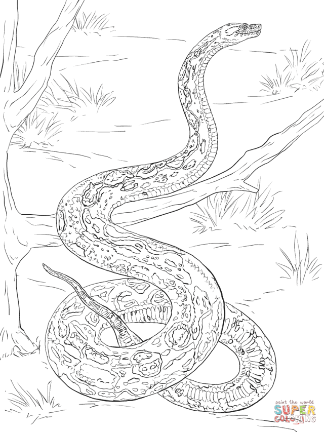 Realistic Boa Constrictor coloring page  Free Printable Coloring