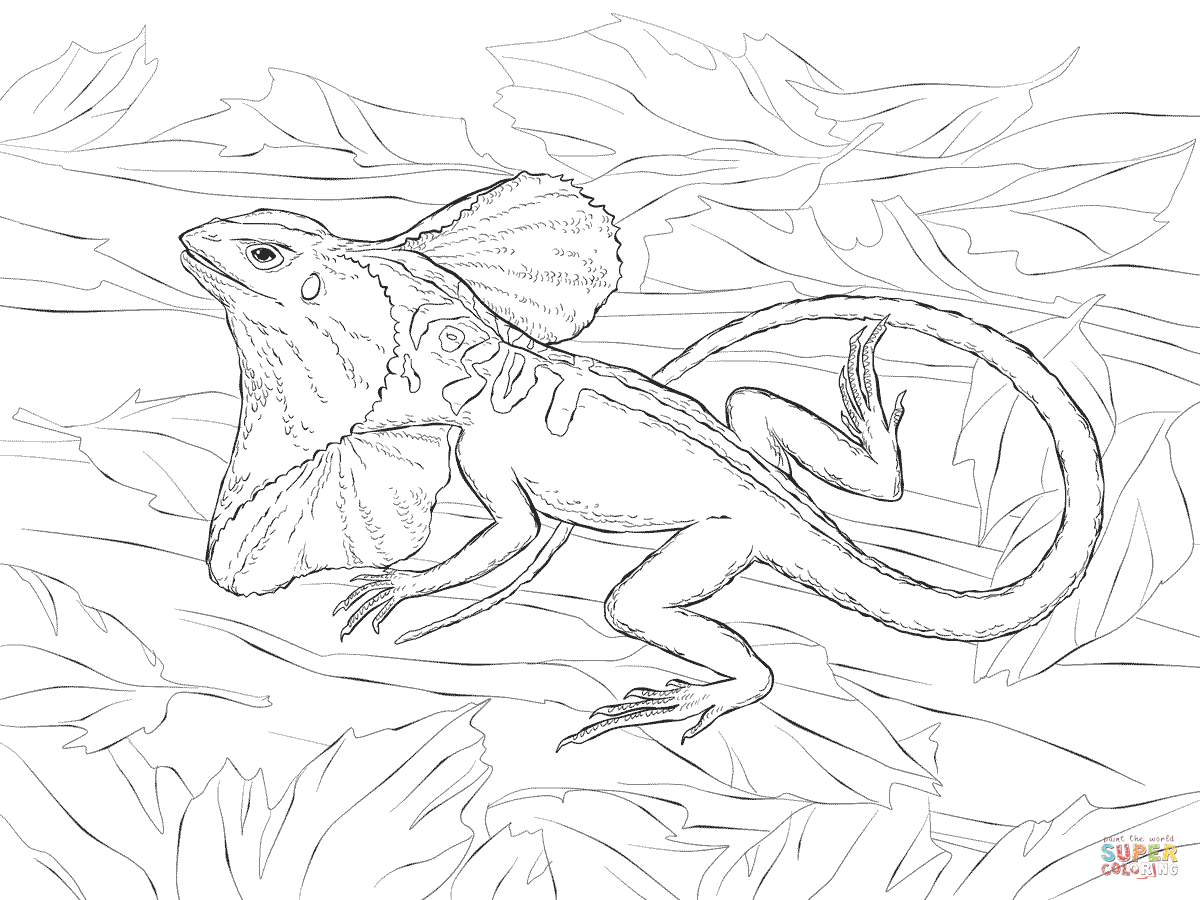 Realistic Frill Necked Lizard Coloring Page