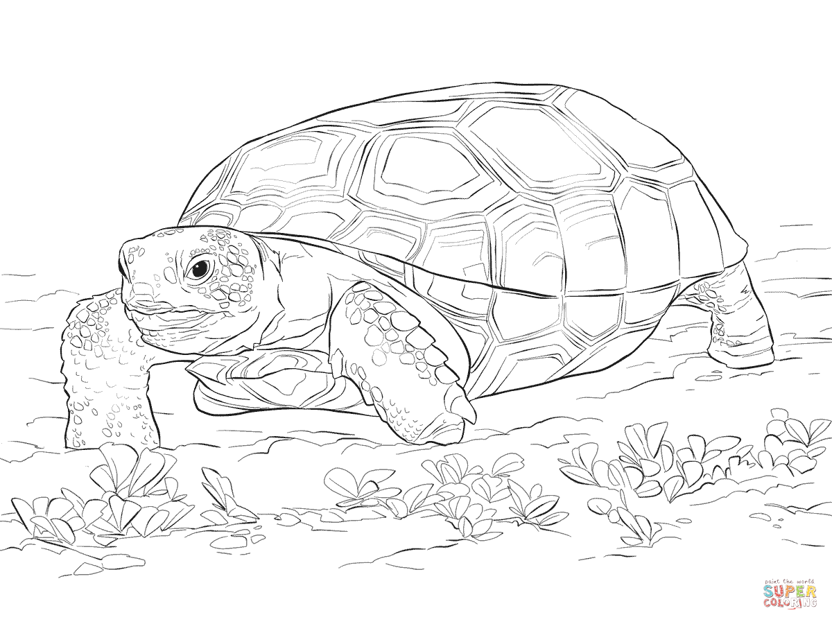 Ausmalbild: Realistische Georgia-Gopherschildkröte
