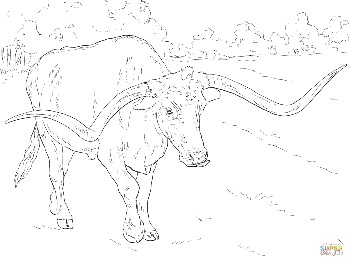 Texas Longhorn Coloring Sheet Coloring Pages