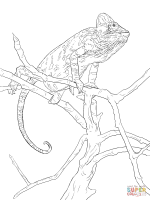 Realistic Veiled Chameleon coloring page   Free Printable ...