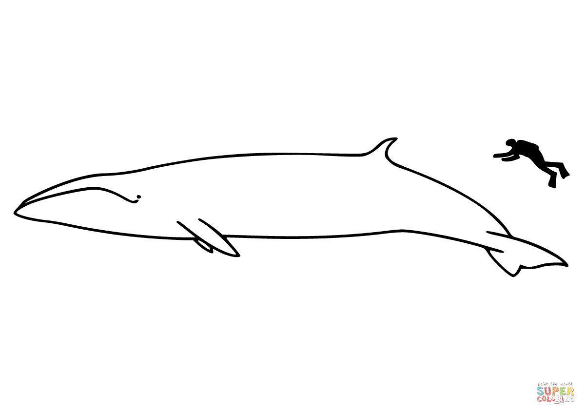 Fin Whale Pages Coloring Pages