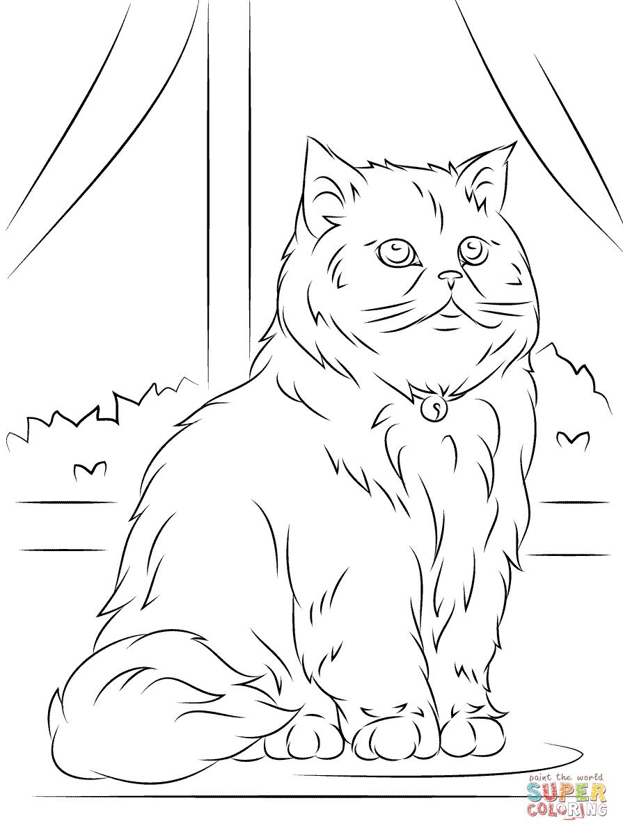 Disegno di Gatto persiano seduto da colorare  Disegni da