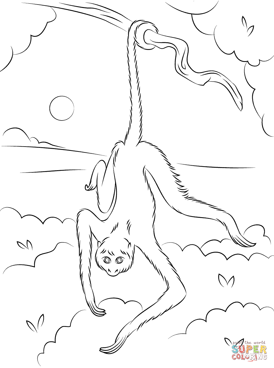 Monkey In Tree Coloring Page Coloring Pages