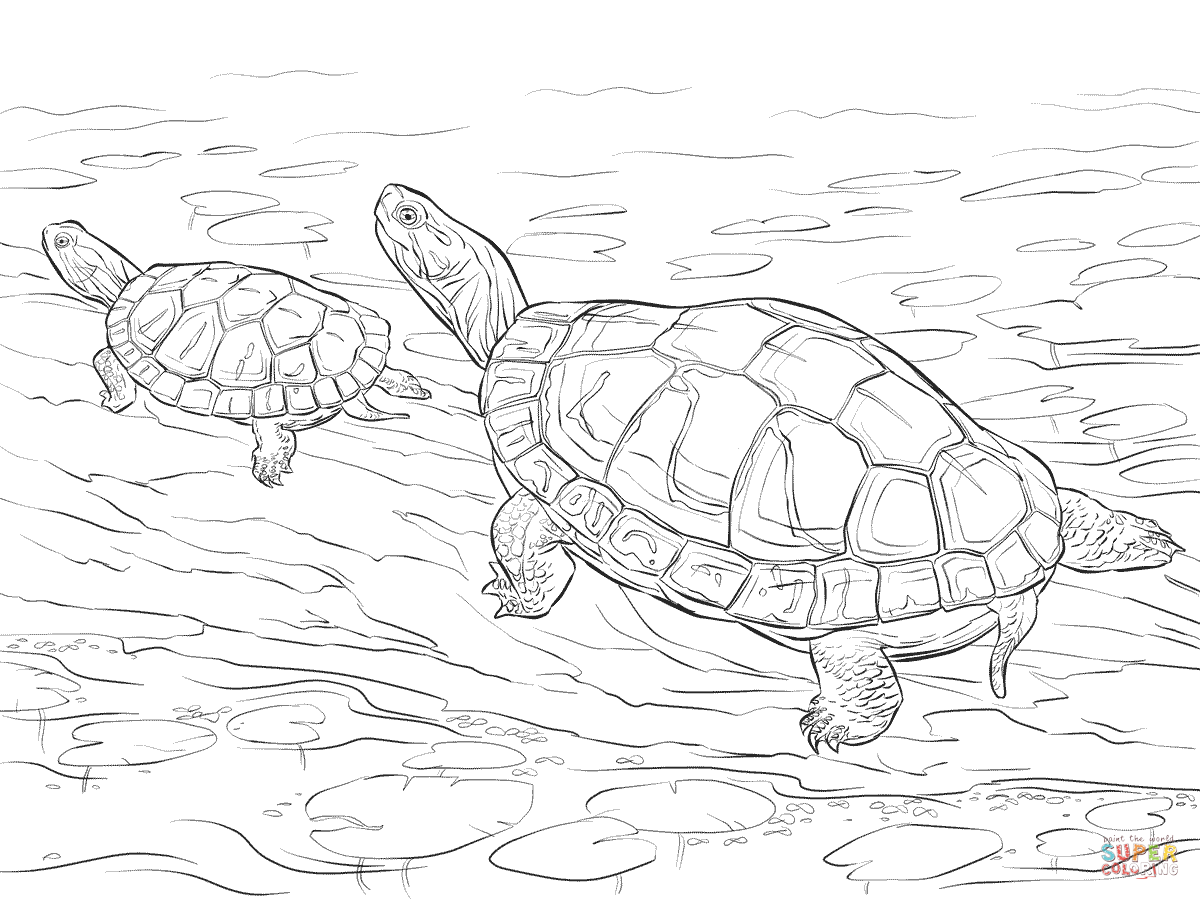 Two Painted Turtles Coloring Page