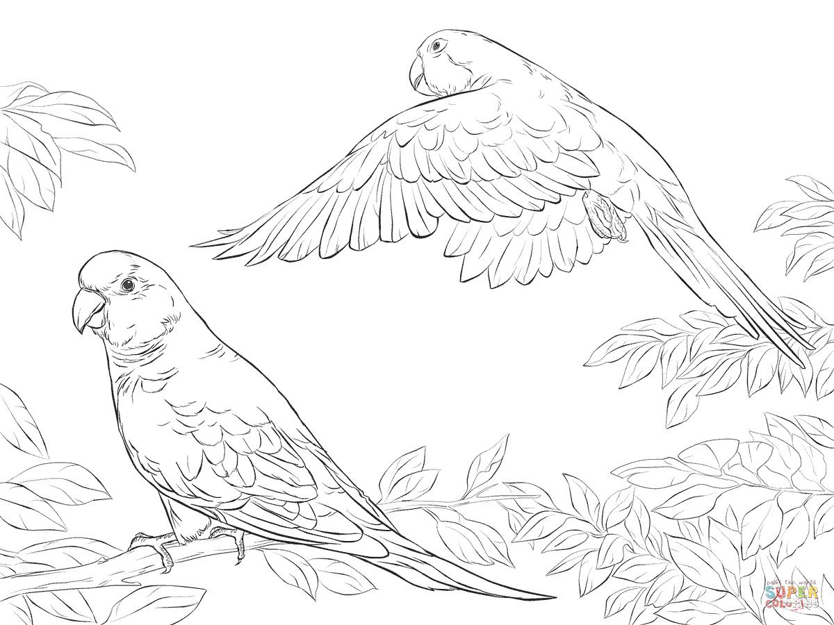 Twee Quaker Papegaaien Kleurplaat