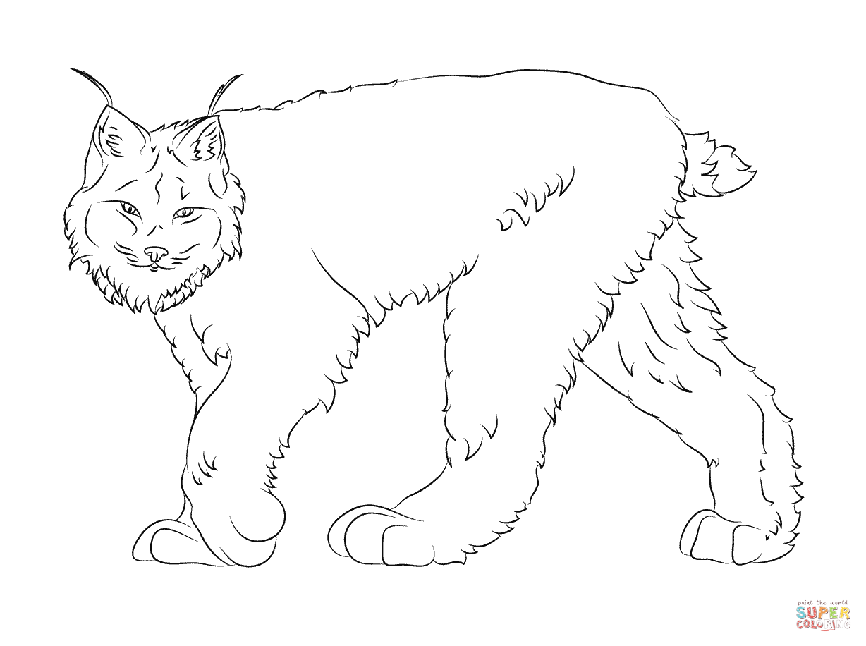 Walking Canadian Lynx Coloring Page