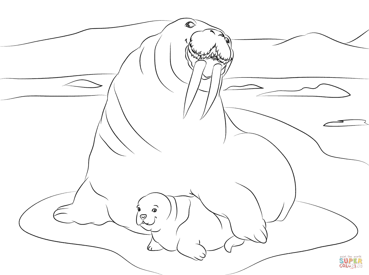 Walrus With Cute Baby Coloring Page