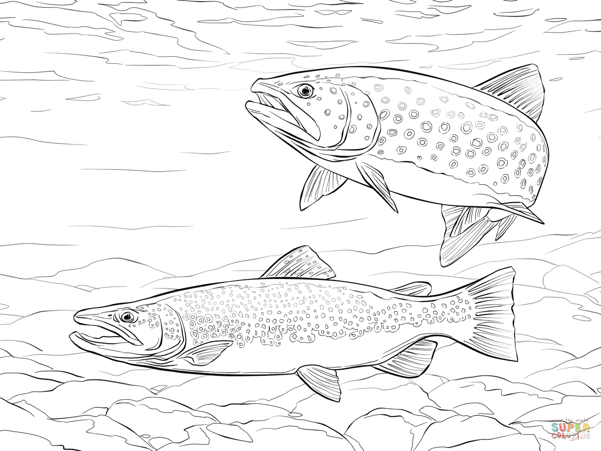 Brown Trout Coloring Page