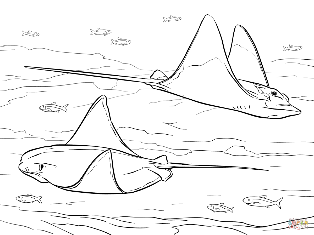 ray and skate diagram afc neo wiring cownose bull eagle rays coloring page free printable