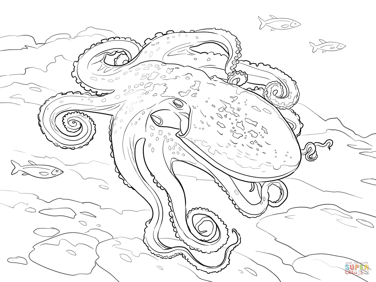 Curled Octopus coloring page  Free Printable Coloring Pages