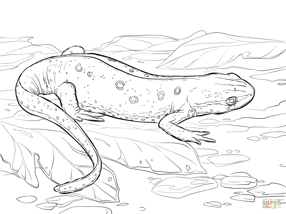 Eastern Red Spotted Newt Coloring Page