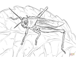 Grasshopper Coloring Pages   Learny Kids