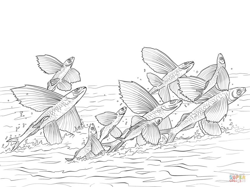 flying fishes shoal coloring page  free printable