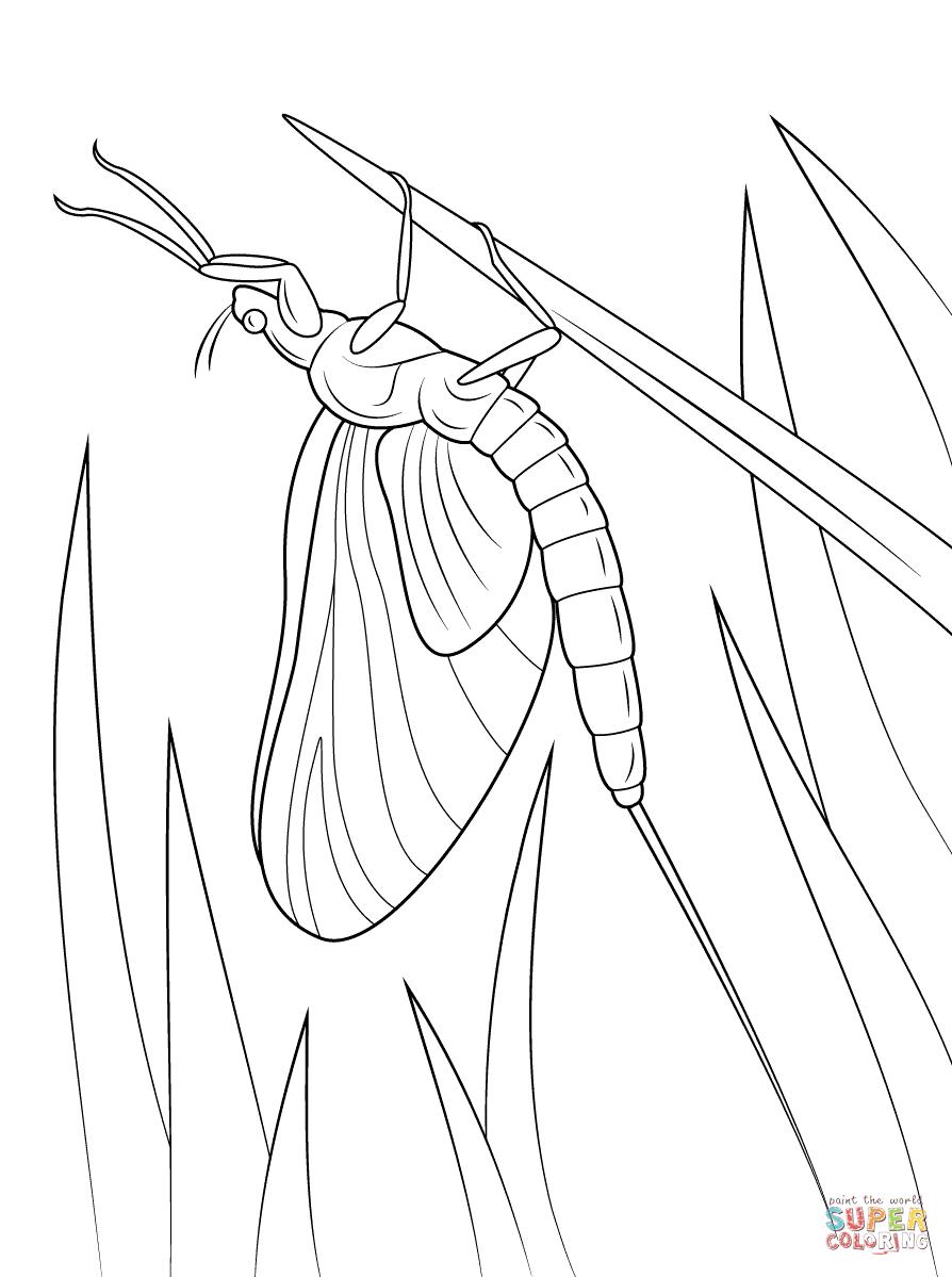 Green Drake Mayfly Coloring Page Free Printable Coloring