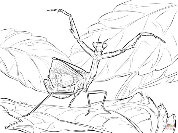 iris praying mantis coloring page