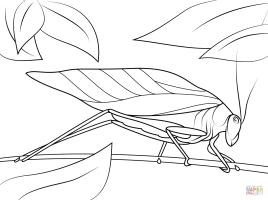 Katydid coloring page   Free Printable Coloring Pages